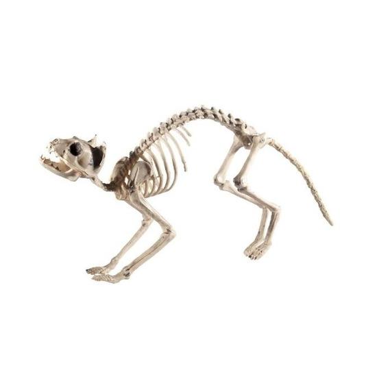 Kat/poes skelet halloween/horror decoratie 60 cm