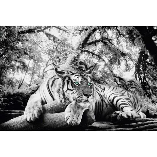 Poster tijger 61 x 91,5 cm wanddecoratie