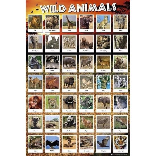 Poster wilde dieren 61 x 91 cm