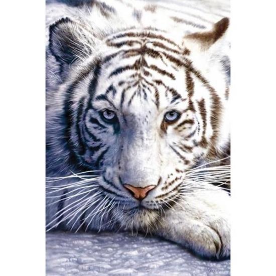 Poster witte tijger 61 x 91 cm