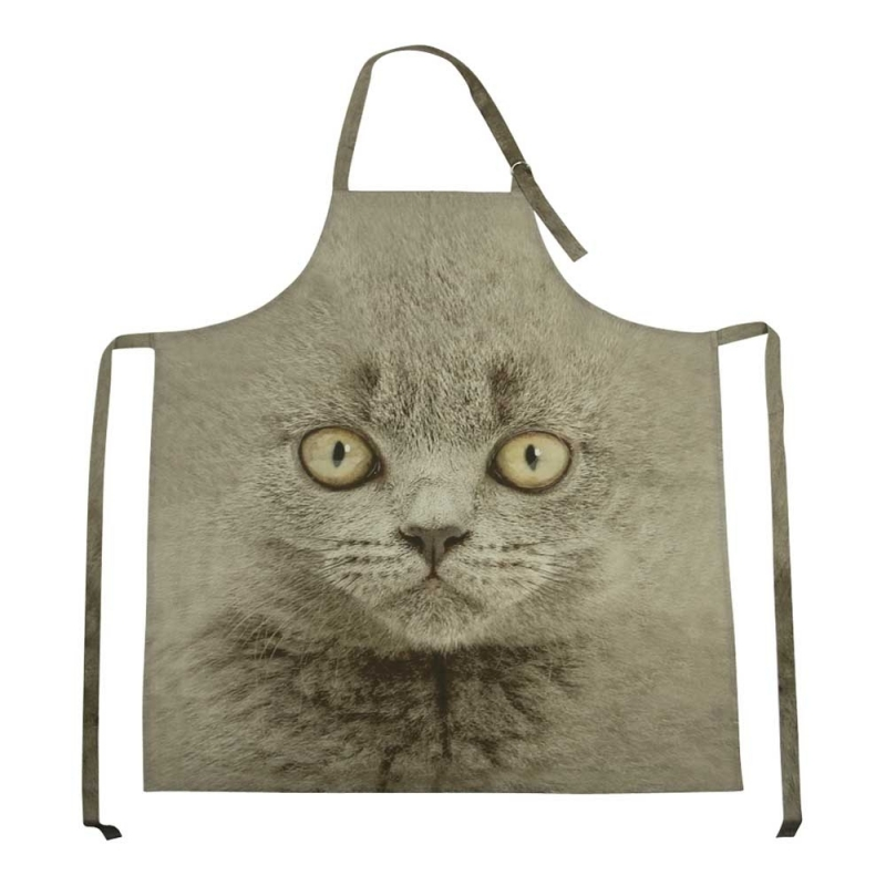 Schort Britse korthaar kat